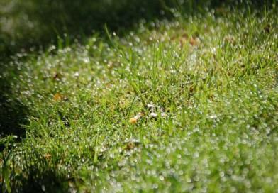 Effiziente sommerliche Gartenbewässerung